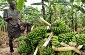 Ugandan agric-tech startup to battle in Shs576m regional showdown