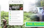 Makerere Launches Cassava Carp Mobile App
