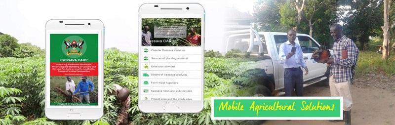 cassava app
