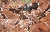 Govt to issue online mineral exploration licenses