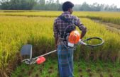 New harvesting technology excites rice farmers