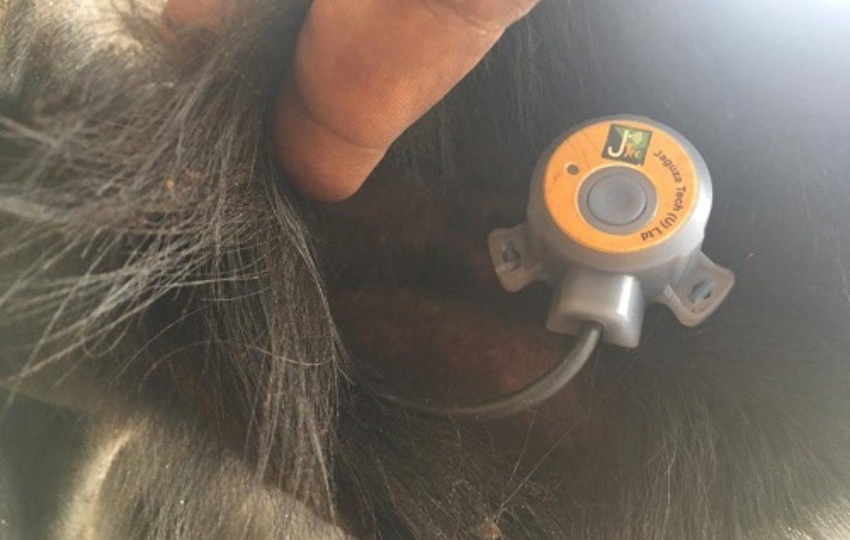 Leveraging IoT, Jaguza Livestock App set to transform livestock farming in Africa
