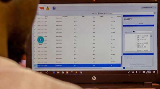 Data as displayed in the computer on the Jaguza Livestock App system