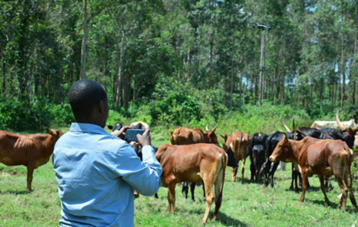 Eye to the future: Jaguza introduces drone technology in livestock farming