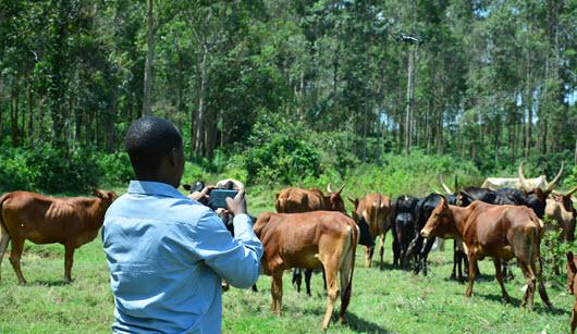 Katamba wants drone technology in livestock farming in Uganda