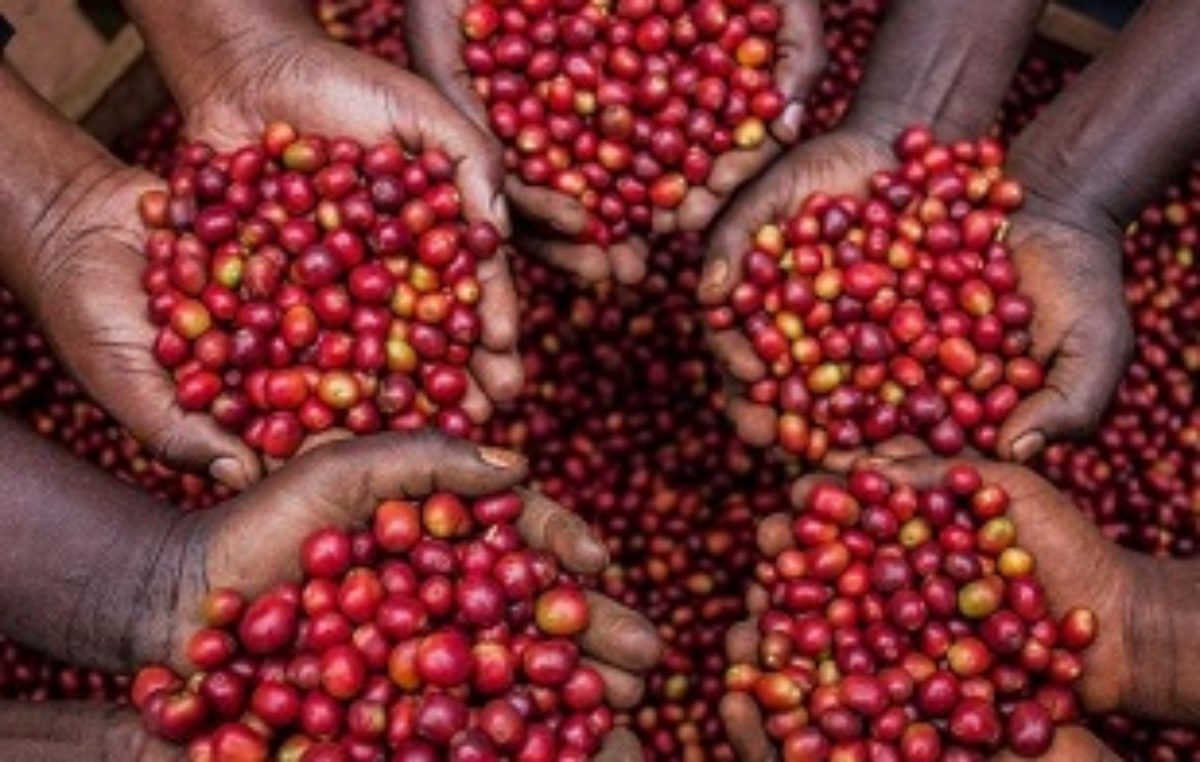 Ugandan firm turns to blockchain technology to boost coffee business