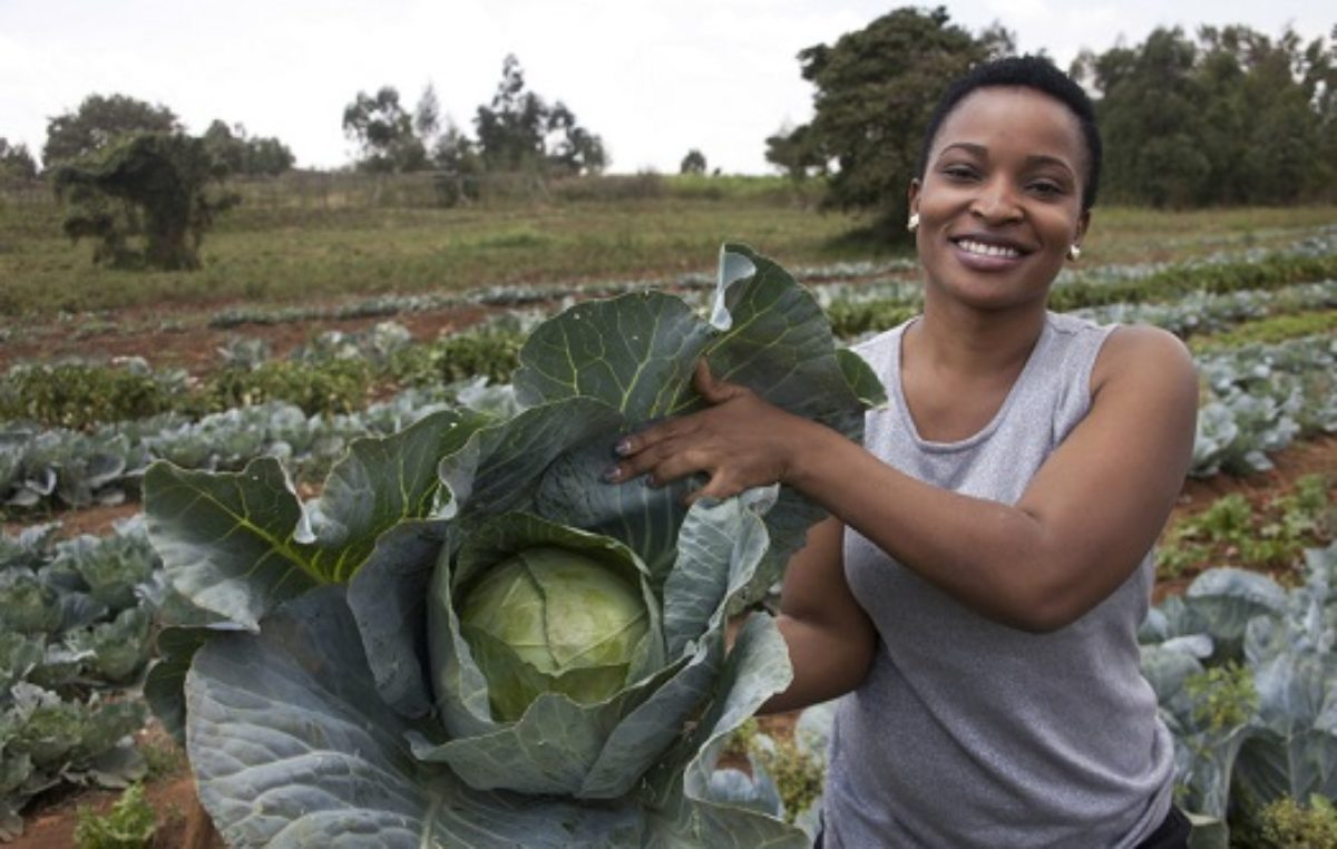 In Kenya, NEMguard launched to boost crop yields without EU residue risk