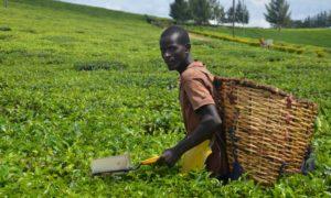 agriculture innovation challenge